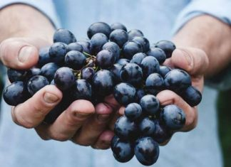 How Many Grapes Does It Take to Make a Bottle of Wine